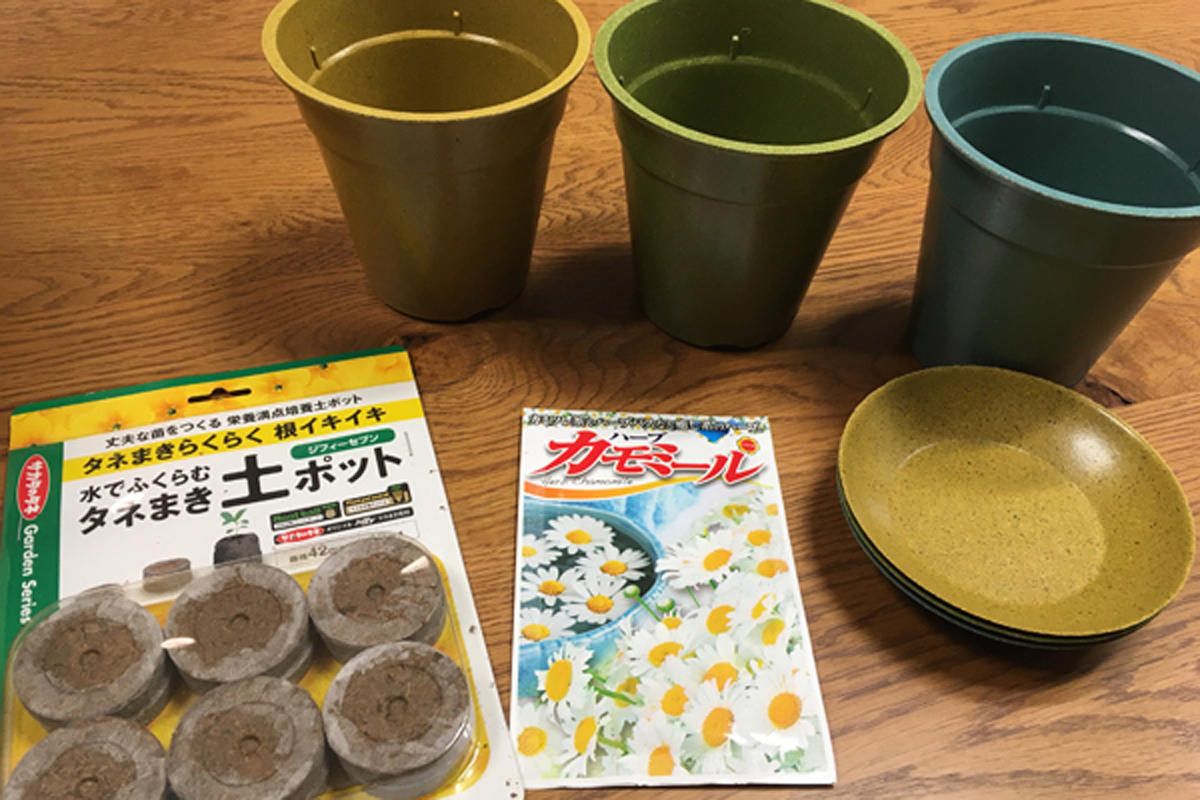 【育苗日記】カモミール Vol.01